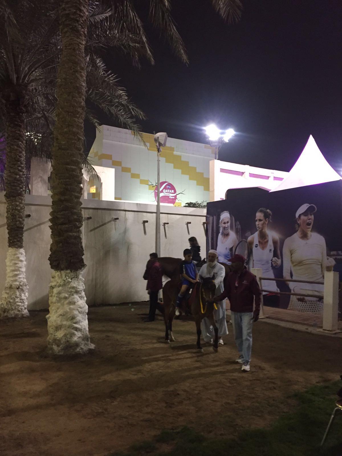 Kinder können auf der Turnieranlage auf kleinen Araber-Pferden reiten.