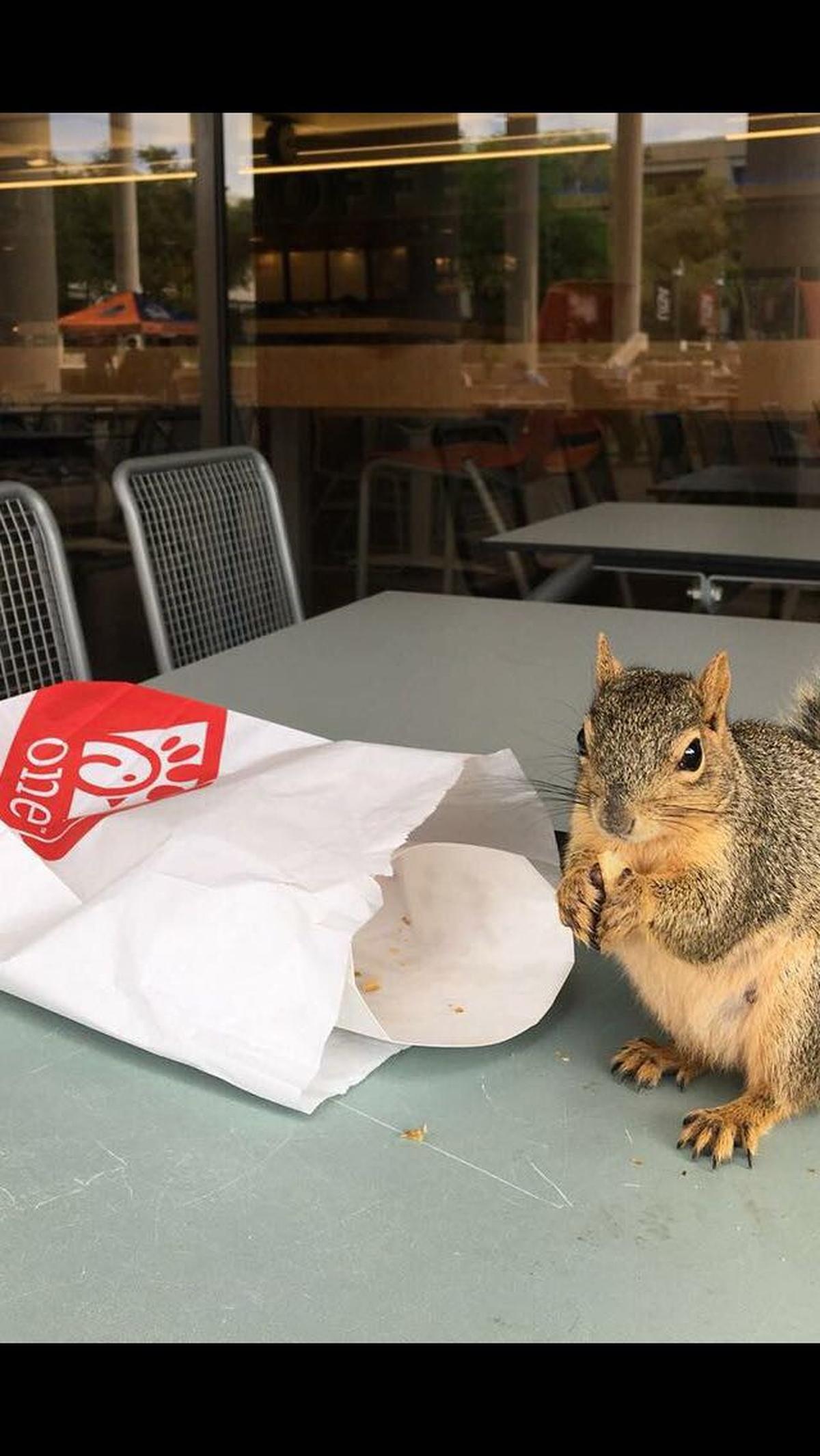 Tierischer Besuch zur Mittagszeit.
