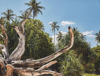 Fotoshooting mit Bidi Badu: Farbenfrohes Kenia